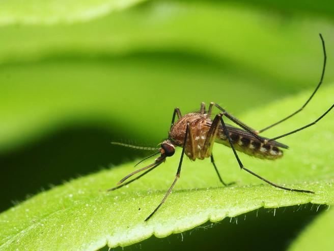 Tutti i metodi per combattere le zanzare, animali più pericolosi di leoni e squali