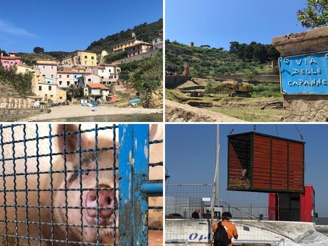 Gorgona, così  sono stati salvati 588    animali dell'isola-carcere