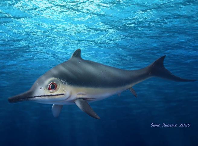 L'ittiosauro, il rettile (varesino) aveva la pinna dorsale come squali e delfini