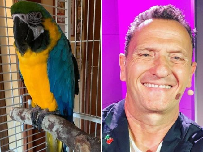 Il pappagallo di Enzo Salvi sta meglio. L'attore: «Fly è salito sul posatoio: gioia immensa»