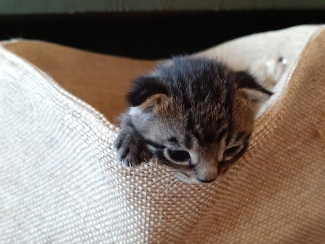 L'istinto materno delle gatte e come si abituano i cuccioli al rapporto con gli umani