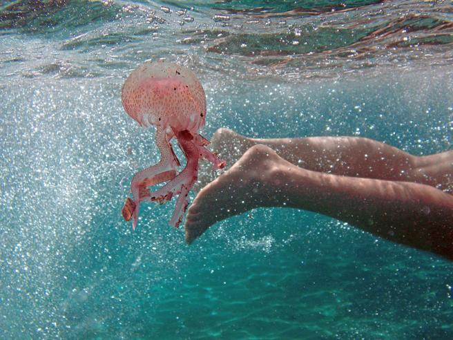 Cosa fare con una puntura di ape o di medusa