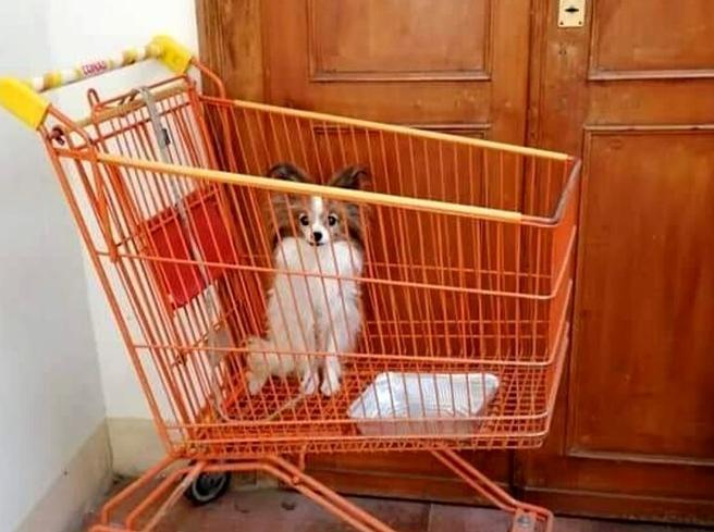 Lo strano caso del cane Lilli, legata al carrello di un supermercato e abbandonata a 200 km da casa