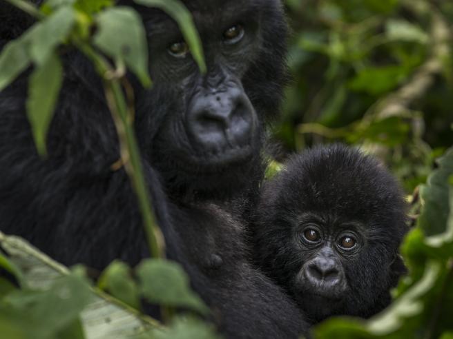 L'agonia del «pianeta vivente»: persi i due terzi delle specie animali. Il Wwf: agire subito, cambiare si può