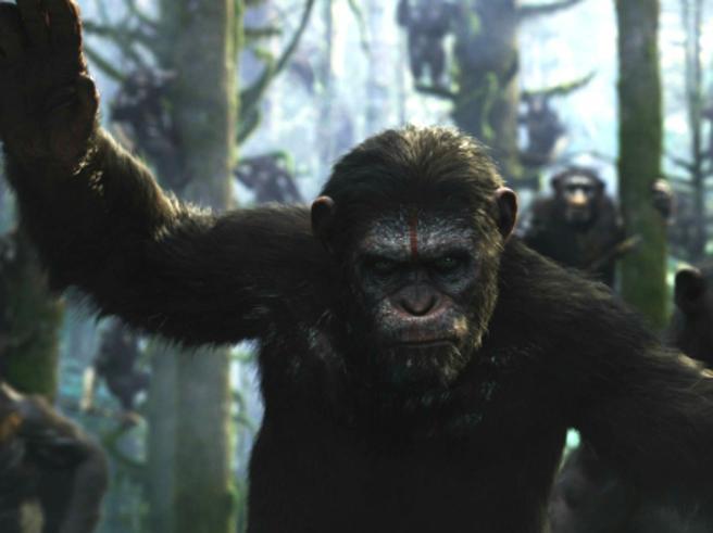 Fukushima, «Pianeta delle scimmie» che mal sopportano il ritorno degli umani