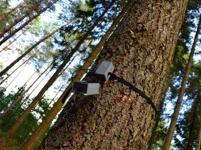 Trentino, ecco gli «alberi parlanti»: ci diranno tutto sulla salute dei boschi