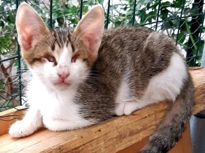 Lieto fine per Sushi, il gattino cieco abbandonato in un sacco: salvato e adottato