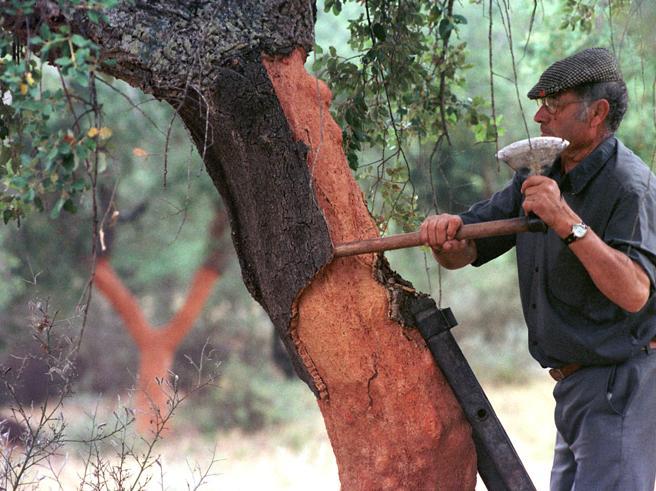 La via di Mazda alla sostenibilità:batterie piccole e boschi di querce