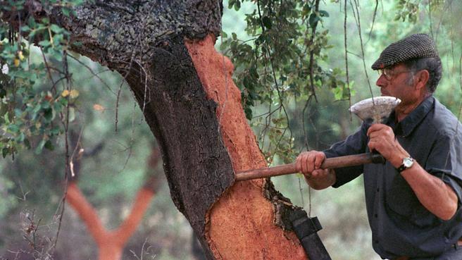 La via di Mazda alla sostenibilità: batterie piccole e boschi di querce