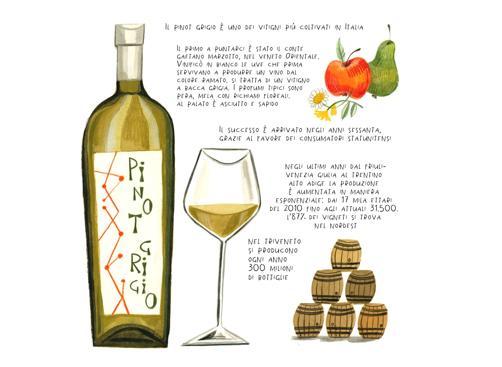 Pinot grigio, il gusto facile che ha stregato gli americani