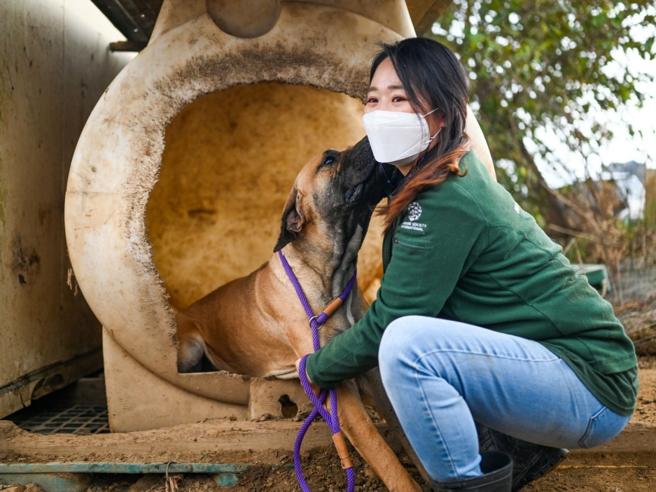 Corea del Sud, chiudono le «fattorie dei cani» allevati per il macello