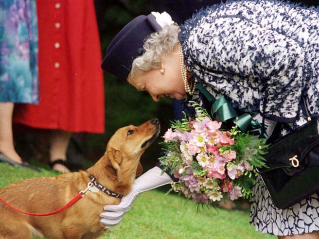 Elisabetta II affranta per la morte del dorgy Vulcan. Ora le resta solo Candy