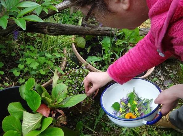 Eleanor Matarese در حال جمع آوری گل و گیاهان (عکس توسط Ghinfanti)