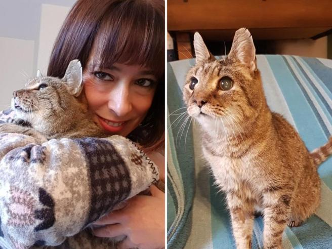 Ritrova il gatto otto anni dopo averlo perso: «Mi ha riconosciuto subito»