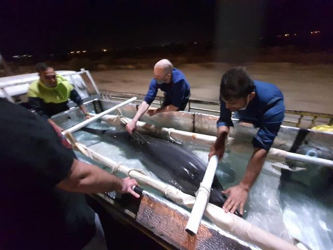 La delfina di Teheran che soffriva di solitudine salvata da un team italiano