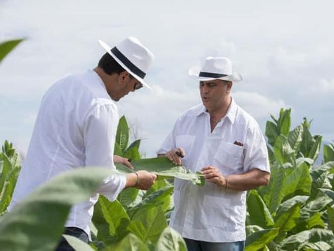 Il sigaro «biologico»Un mestiere antico ritorna in Sicilia