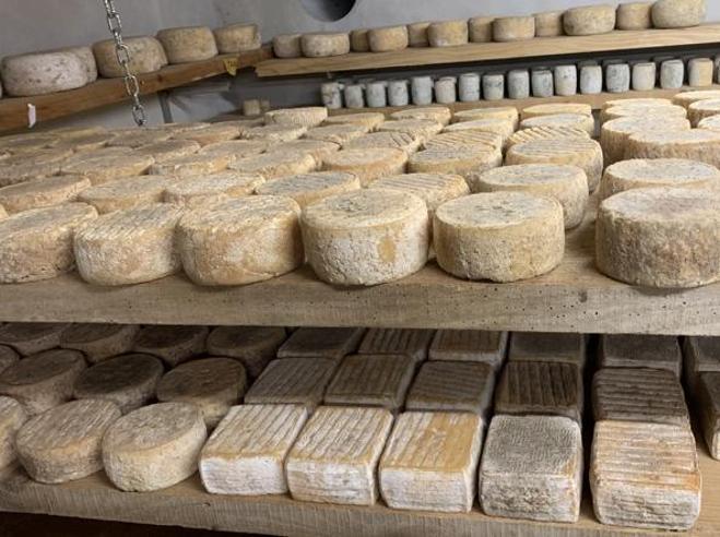 Formaggi artigianali, dove comprarli online direttamente dai pastori
