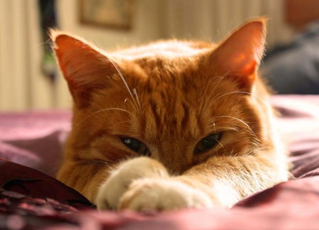 Festa  del gatto, le migliori frasi da dedicare al nostro felino