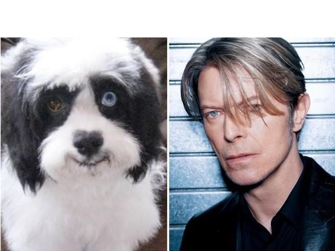Morto Max, il cagnolino di David Bowie (con gli occhi di colore diverso come il Duca Bianco)