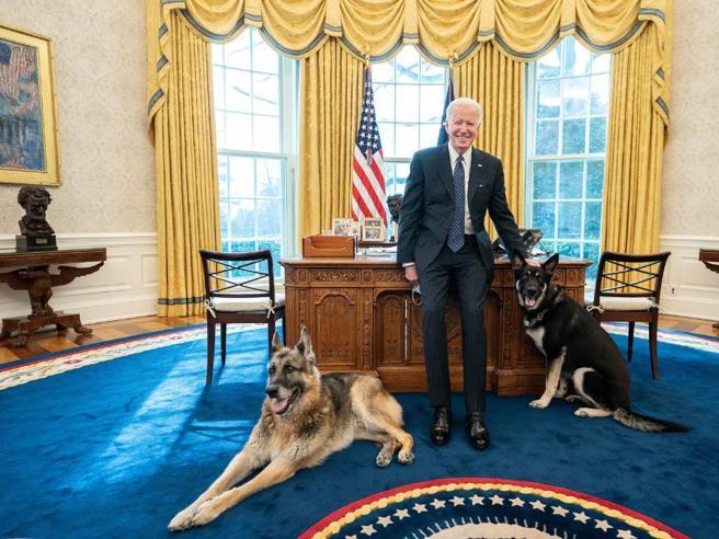 Joe Biden, la prima volta allo Studio Ovale per i suoi due cani Champ e Major