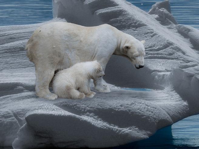 La Giornata Mondiale dell'Orso polare e i progetti per salvare una specie a rischio estinzione