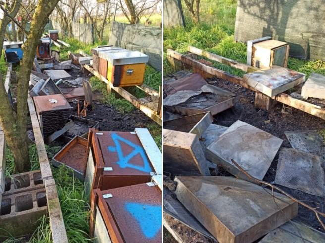 Caserta, la mobilitazione social per aiutare l'apicoltore  colpito dall'incendio: «Contento di tanto supporto»