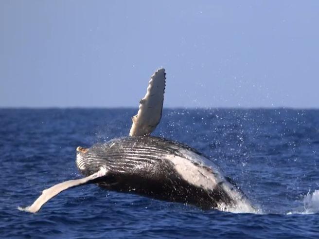 Brian Skerry: «Le balene sono come noi, anzi meglio. E si trasmettono cultura e leggende»