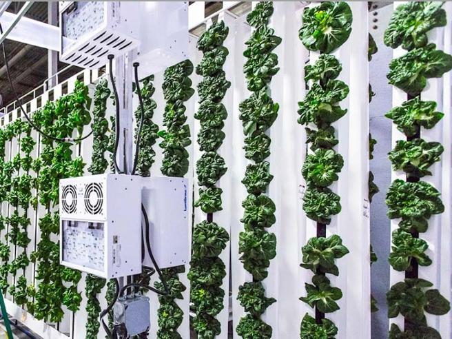 A Roccapiemonte una scuola ha creato un orto verticale per lanciare l'agricoltura 4.0