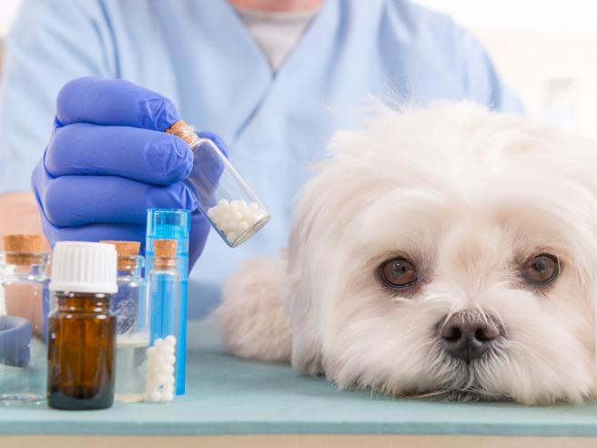Speranza firma, ora gli animali domestici possono essere curati con farmaci ad uso umano