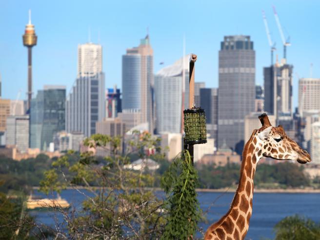 Covid in Australia, vietato il rientro dall'India. Chi trasgredisce rischia il carcere