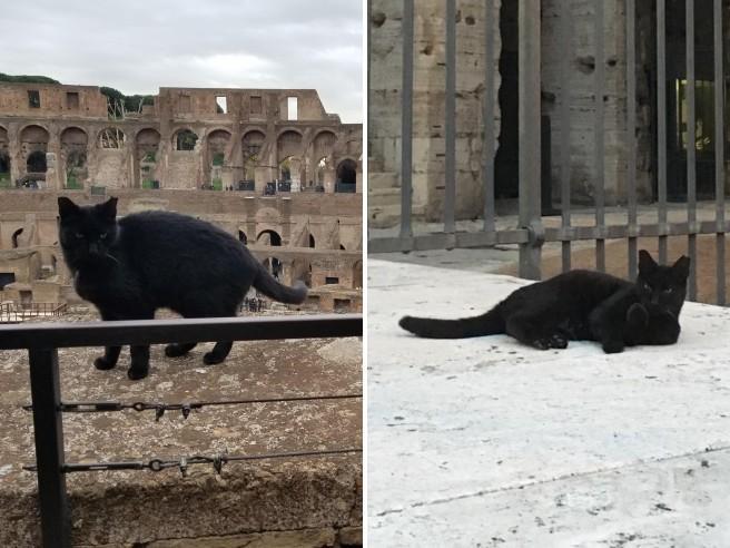 Addio a Nerina, la gatta guardiana del Colosseo: «Ci mancherà ogni giorno»