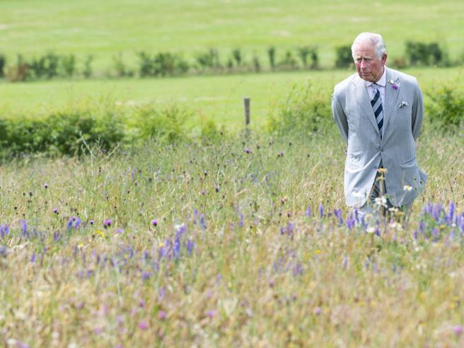 La «battaglia dei prati»: l'erba degli inglesi è sempre più alta