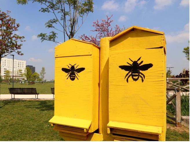 Il miele d'Olanda, con hotel e B&B per salvare le api