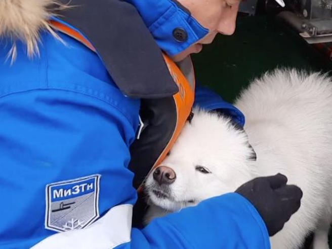 Russia, marinai salvano cucciola di samoiedo che da una settimana vagava tra i ghiacci