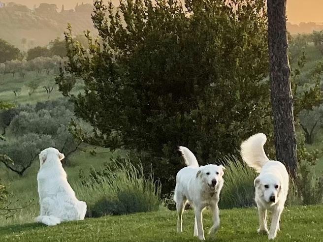 La danza dei saluti e delle coccole: come gestire il rapporto con più cani