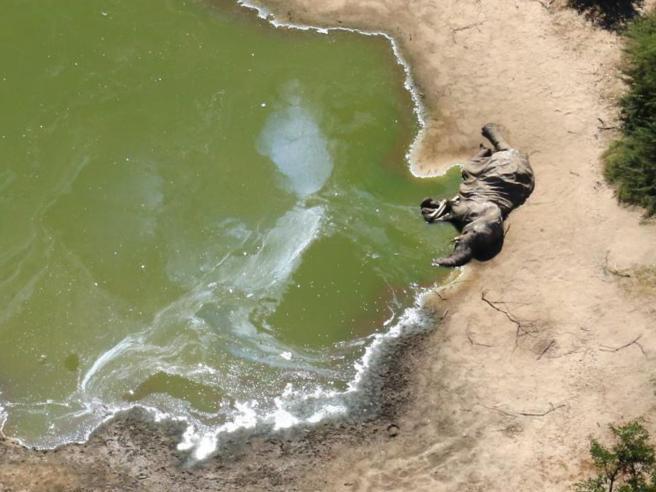 Namibia e Botswana, 130 mila elefanti a rischio per la costruzione di pozzi petroliferi