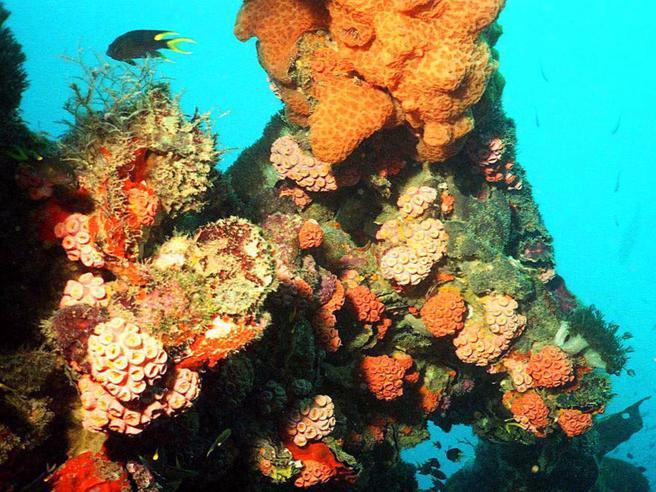 Unesco: «La grande barriera corallina è a rischio». L'Australia pronta a impugnare la decisione