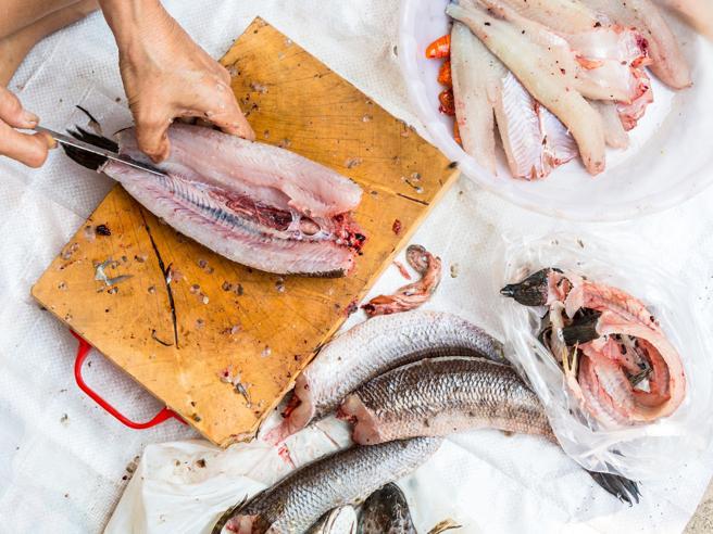 Pesce, come pulirlo, tagliarlo e sfilettarlo. La guida completa