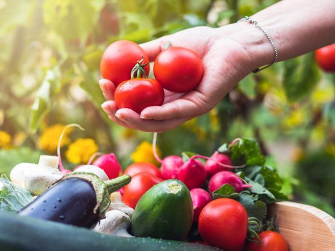 Cibo biologico, consumo cresce del 7 per cento con il Covid per Coldiretti    Cook