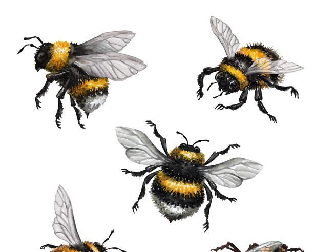 Io, filosofa del postumano, a lezione dagli insetti: «Le api sono superiori»