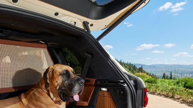 Vacanze in auto, il cane viaggia in Bmw. L'edizione speciale con Poldo Dog Couture