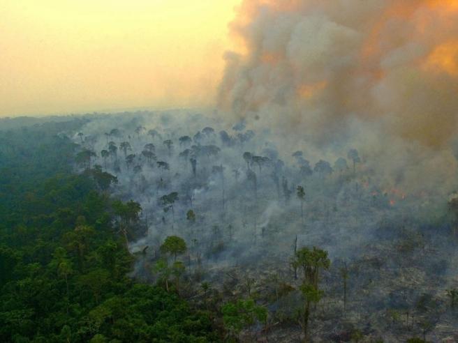 L'Amazzonia oggi emette più anidride carbonica di quanta riesca ad assorbirne