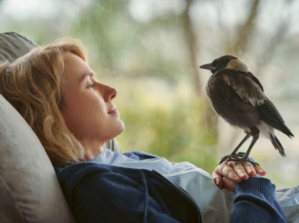 Naomi Watts e la gazza Penguin Bloom: storia realmente accaduta di una rinascita