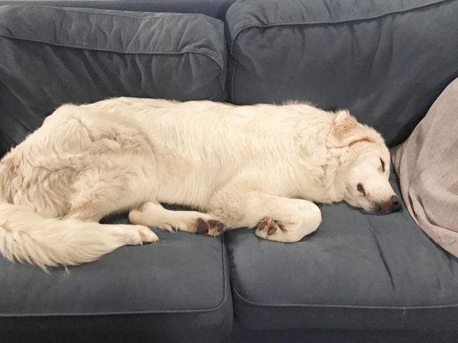 Perché ai cani piace tanto salire sul (nostro) divano?