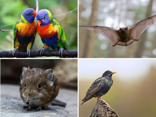 «Gli animali mutanti»: così l'aumento delle temperature sta modificando forma e dimensione di molte specie