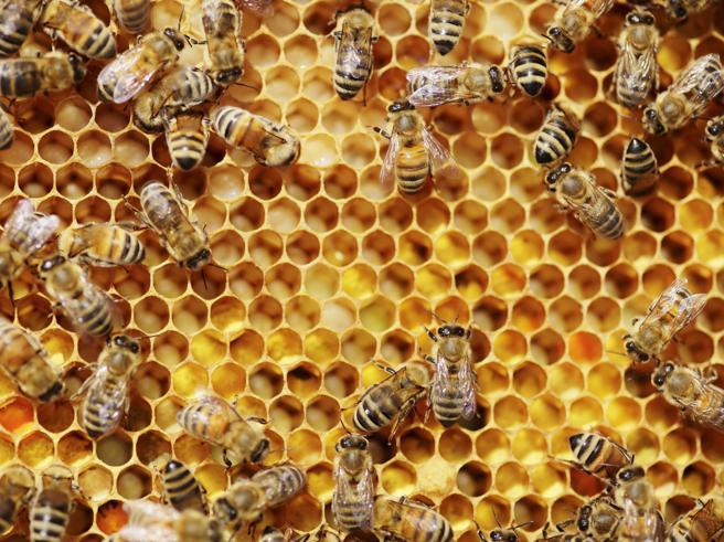 Miele, è crisi: produzioni ai minimi storici in Italia
