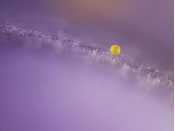 Le migliori foto al microscopio del 2021 - Un granello di polline