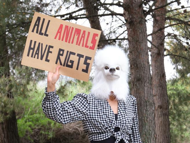 «Basta animali trattati come oggetti, cambiamo il Codice Civile»