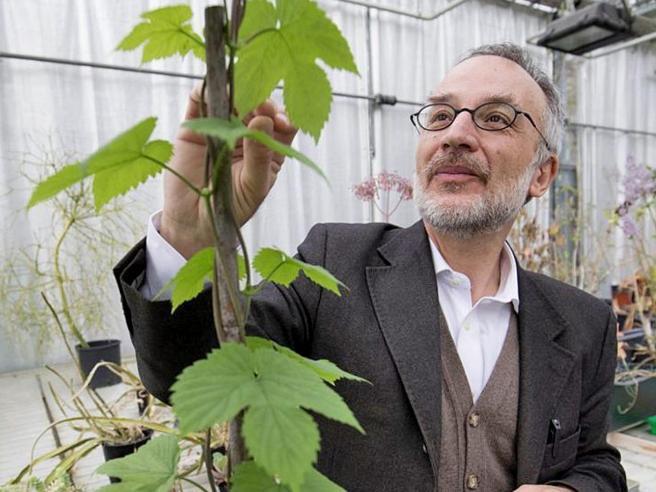 Mancuso, il botanico attaccato dagli estremisti vegani: «Mi accusano di difendere chi produce carne»