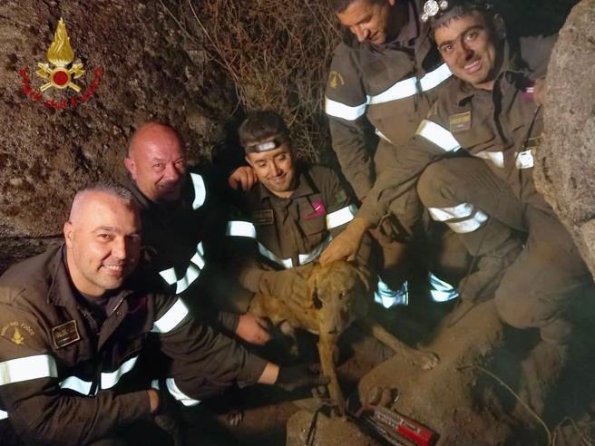 Un cane incastrato nella roccia è stato salvato dopo più di 10 ore dai vigili del fuoco